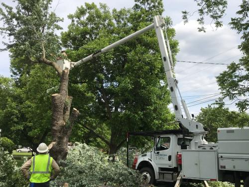 Clearing limbs from a power line