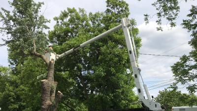 working to clear tree limbs from a power line